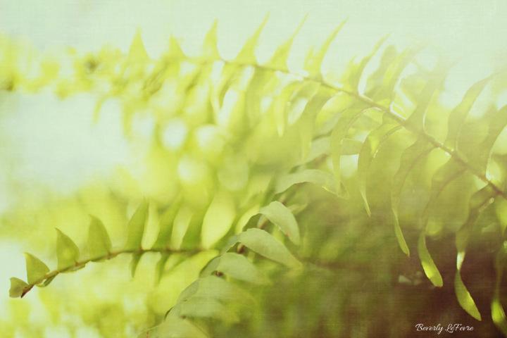 fern goodness