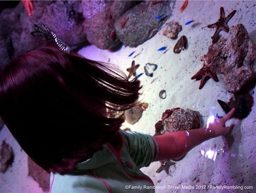 Touch Tank at SEA LIFE Aquarium