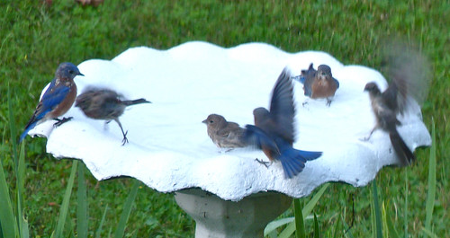 Why I Painted the Birdbath #1