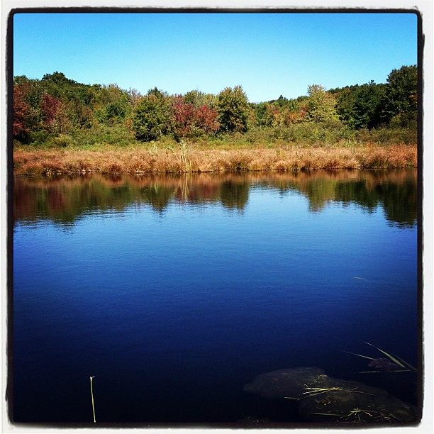 Beaver pond in warren Connecticut