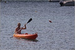 canoe(0.0), watercraft rowing(0.0), boats and boating--equipment and supplies(1.0), vehicle(1.0), sea(1.0), kayak(1.0), boating(1.0), kayaking(1.0), watercraft(1.0), sea kayak(1.0), canoeing(1.0), oar(1.0), boat(1.0), paddle(1.0),