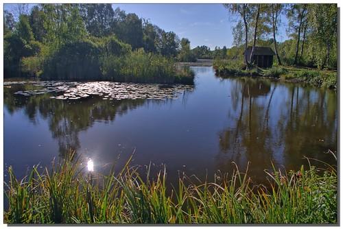 Réflexion matinale dans le Marais de Génonville