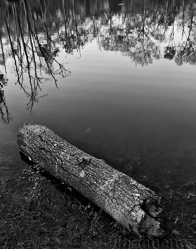 woods.reflection02.jj.08042012.bw