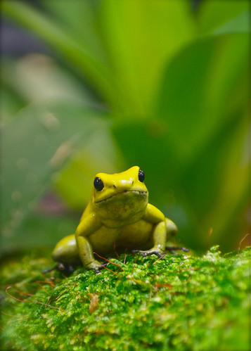 World's Most Poisonous Frog