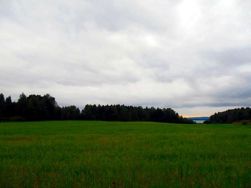 Ingesund field