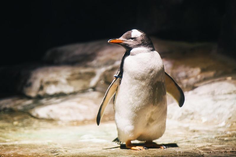 ペンギン先生。