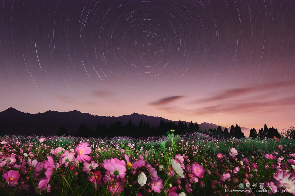 波斯菊星軌 紅粉佳人