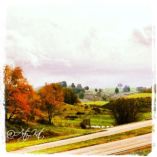 Rainy autumn day in Appalachia. I love the lone tree in the far off distance slightly to the right by Quilter Bear