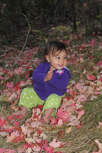Jovie sitting in the red leaves 4