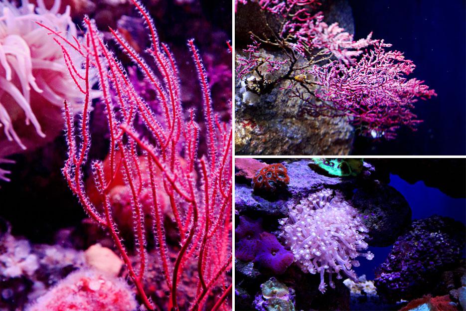 093012_aquarium10