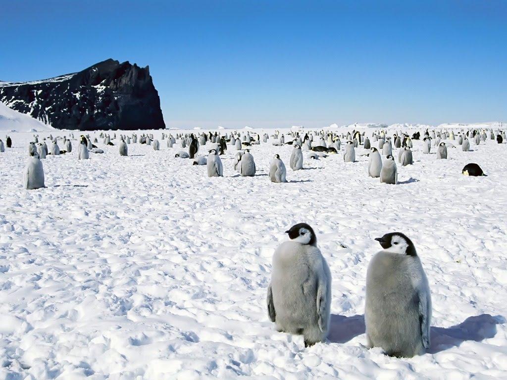 All Sizes Pingvini Download Besplatne Pozadine Za Desktop