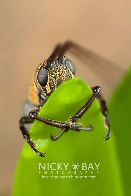 Longhorn Beetle (Cerambycidae) - DSC_6922