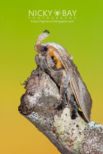 Moth - DSC_6598