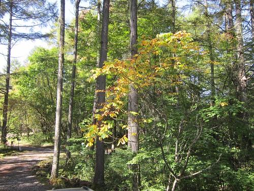 色付き始めた庭の木々 2012年10月5日10:04 by Poran111