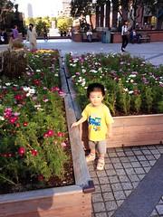 花壇のとらちゃん (2012/10/4)