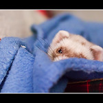 (30/52) Let me sleep some more!