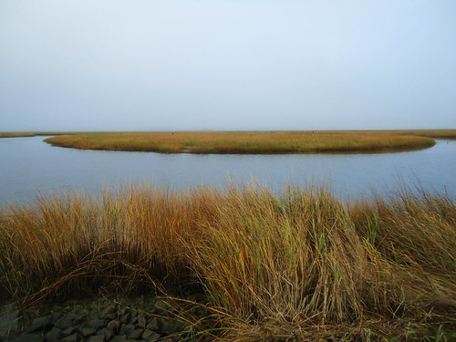 Scarborough Marsh