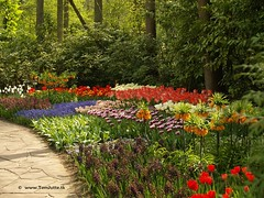 Dutch Tulips, Keukenhof Gardens, Holland - 0742