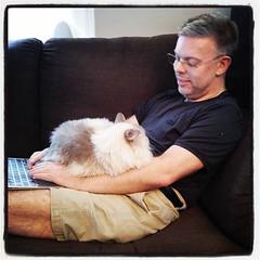 Denial of service-attack, by cat. :heart_eyes_cat: @basic70 fick överta klapptjänsten - jag kanske inte var duktig nog? Strax innan låg han nämligen på mig, uppe under hakan. Och spann. Mys. #kattvakt