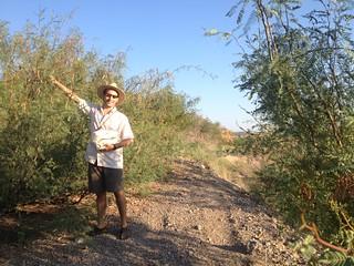 Mesquite Harvest