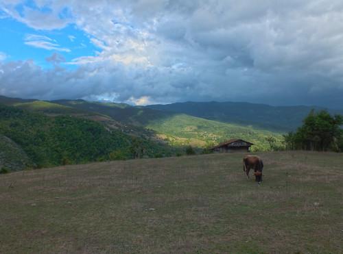 Kastamonu, hegyek, Valla kanyon, tehén