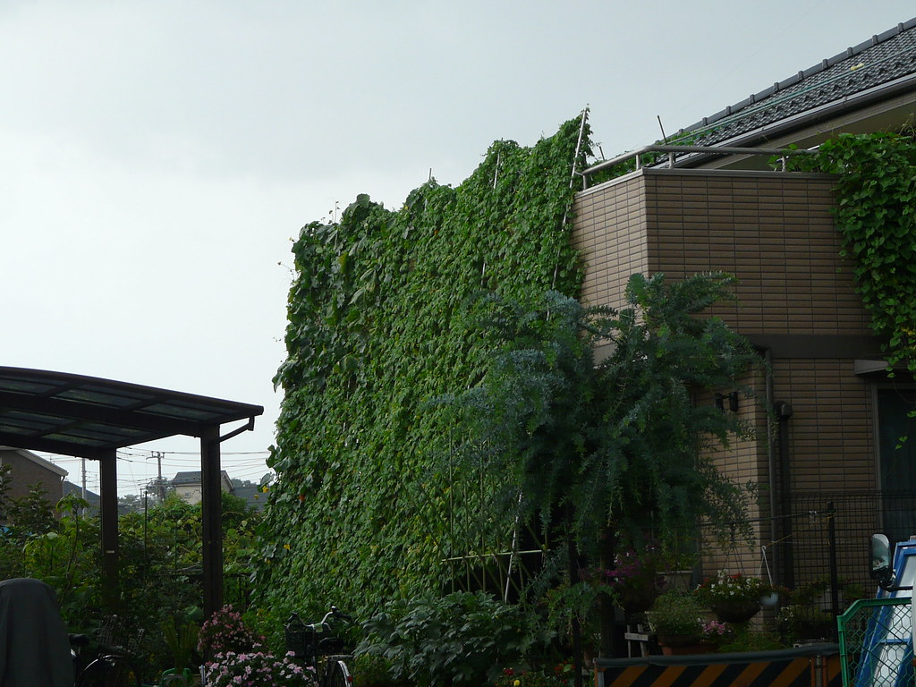 Breaking new boundaries in suburban Tokyo green curtains