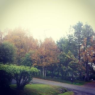 autumn 017