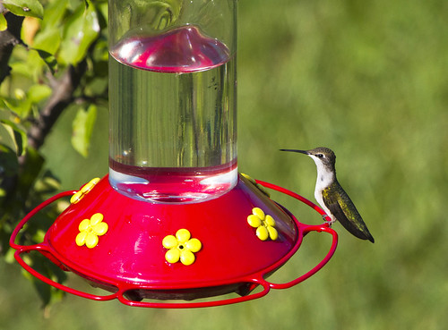 Hummingbirds on Labor Day by Ricky L. Jones Photography
