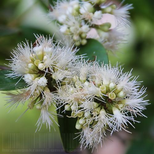 nature natureza flowersarebeautiful bewiahn