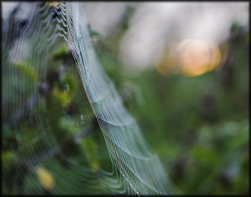 sunrise spiders web dorset daen