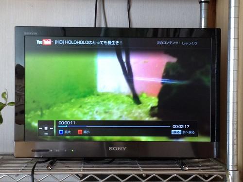 自分で撮ったYouTube動画をテレビで見る時代です。(おそっww)