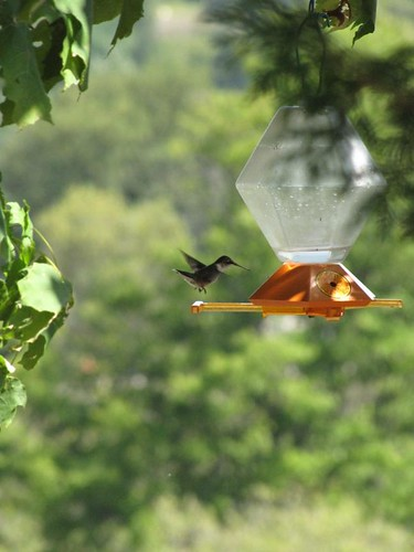 At the feeder #2
