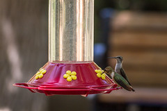 finch(0.0), lighting(0.0), animal(1.0), hummingbird(1.0), yellow(1.0), wing(1.0), bird feeder(1.0), bird(1.0),