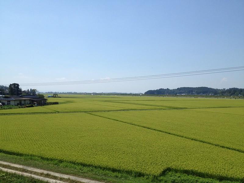 北上川沿いの畑