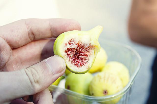 Ficus caric - fig in Bosnia and Herzegovina