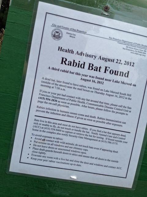 rabid bat2.jpg