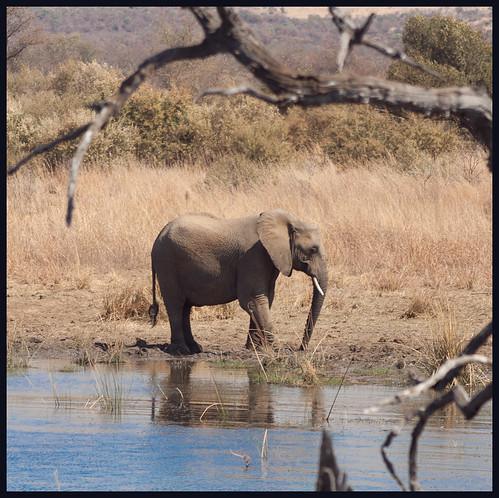 olifant by hans van egdom