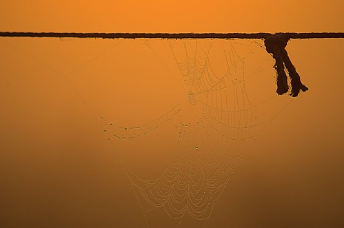 light sunset fire licht spider nikon spiderweb rope september spinne tau feuer sonnenaufgang 2012 spinnennetz morgentau seil frühermorgen d7000