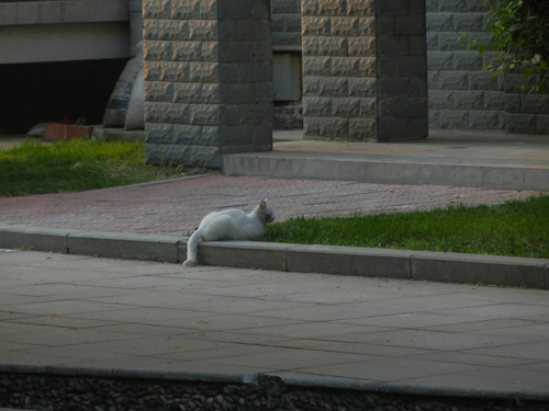 Cats in Shenyang, China _ 9925
