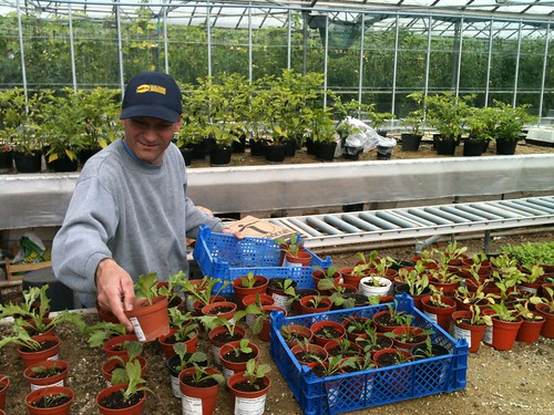Keith looking after some of the seedlings