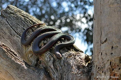 Snake on a tree