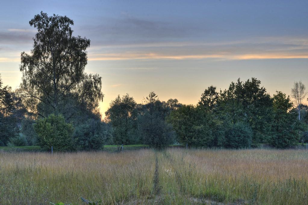 elevation of bremgarten, switzerland - maplogs, Garten und erstellen