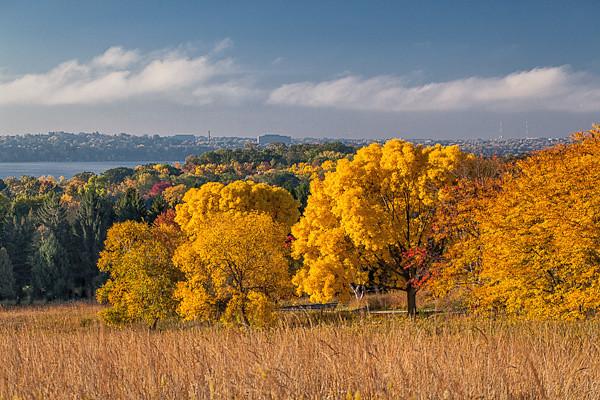 Autumn, Overlooking Madison