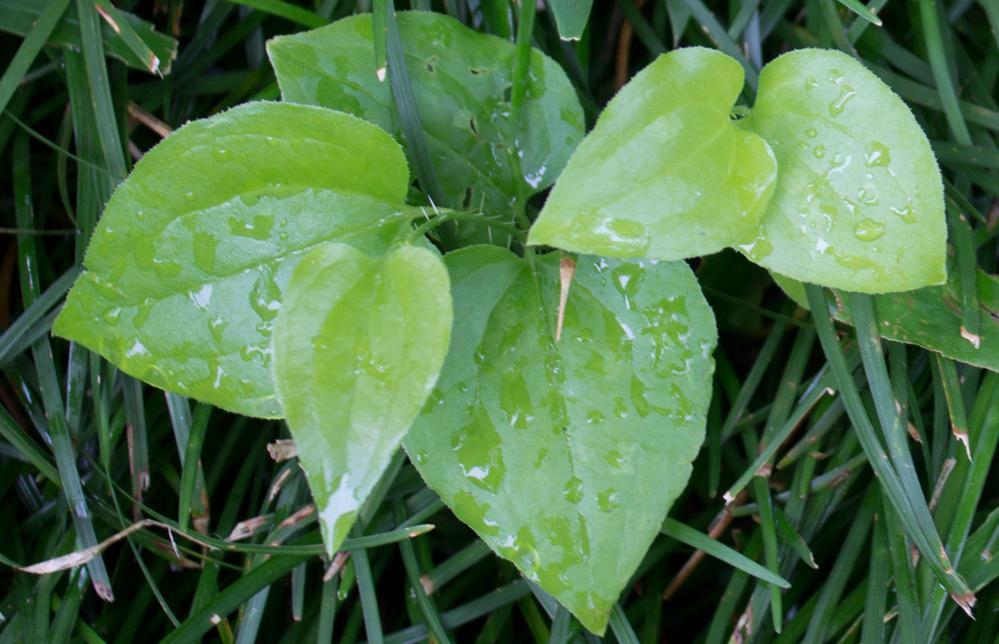 Leaf23