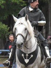 english riding(0.0), western riding(0.0), eventing(0.0), dressage(0.0), animal training(0.0), animal sports(1.0), equestrianism(1.0), mare(1.0), stallion(1.0), equestrian sport(1.0), rein(1.0), halter(1.0), bridle(1.0), pack animal(1.0), horse tack(1.0), horse(1.0), horse harness(1.0), jockey(1.0),