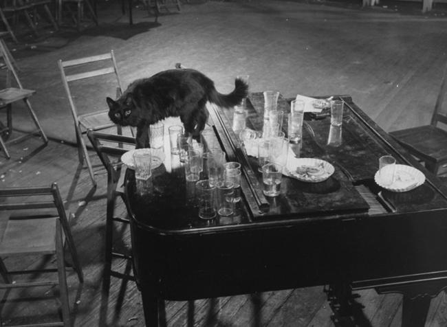 Gjon Mili's cat