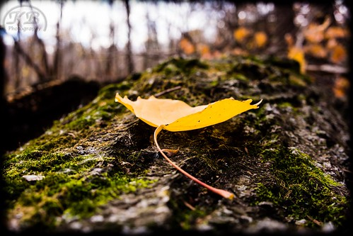 park autumn fall nature landscape leaf moss log flickr bokeh cottonwood weathered decaying facebook stanleyeddypark