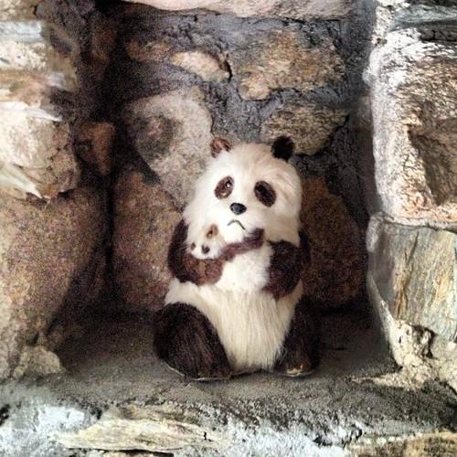 #sad #sneezing #panda