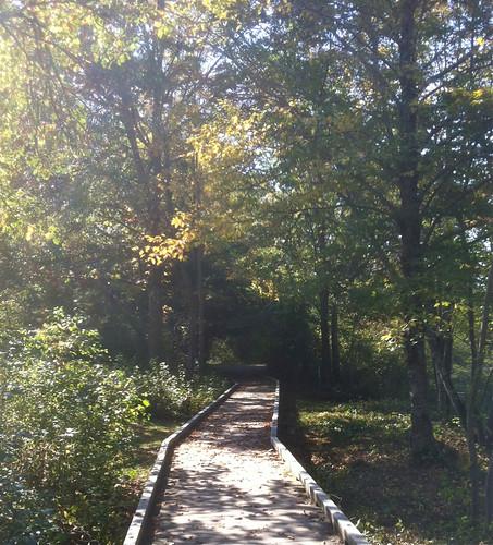 Wooden Walkway (Bradley Palmer State Park) by randubnick
