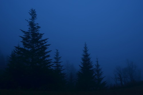 blue trees silhouette fog dawn nc northcarolina blueridgeparkway balsam devilscourthouse